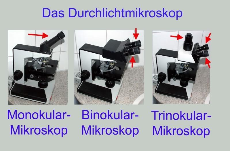 Mikroskop kaufberatung für absolute anfänger