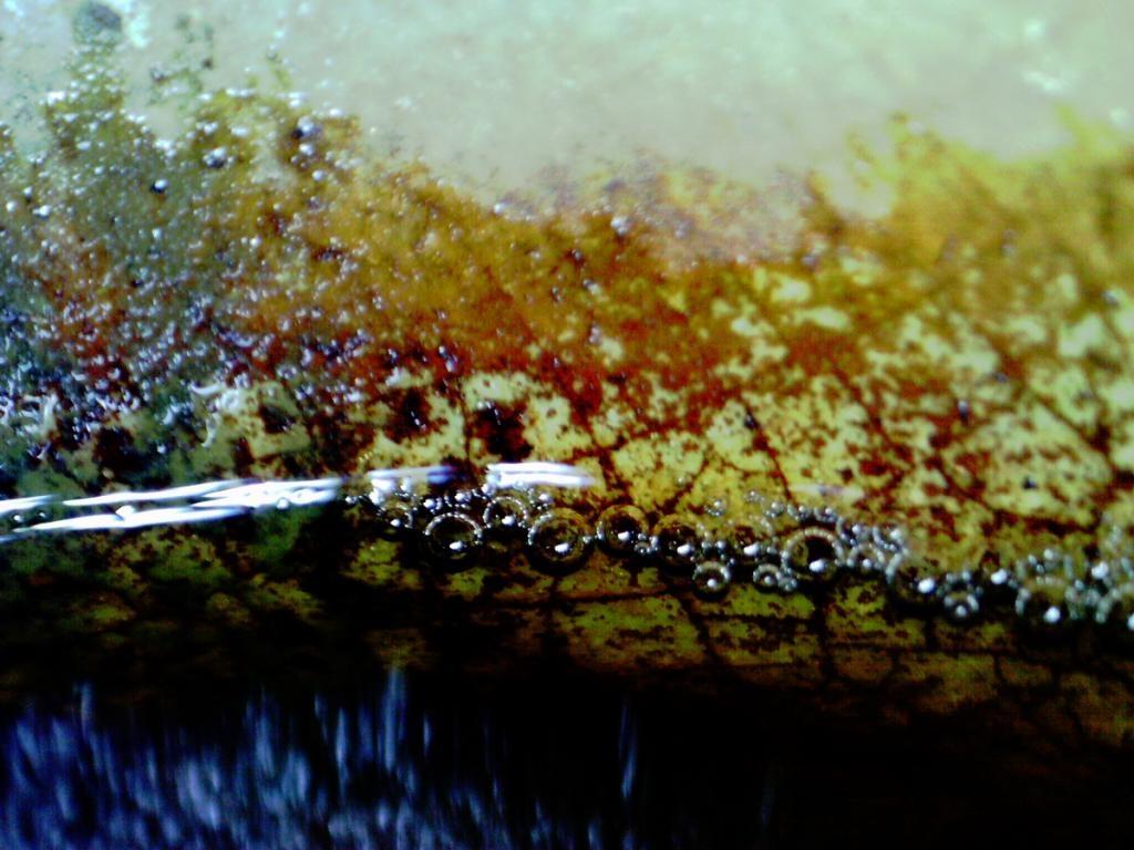 Rescue a dnt digimicro c digital microscope from scrap u high